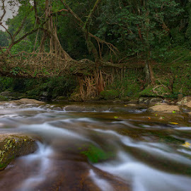 Fifteen Seconds of Riai Root Bridge, Malynawng, Meghalaya, India by Manabendra Dey - Landscapes Forests ( root bridge, riai village, meghalaya, india, mawlynong )