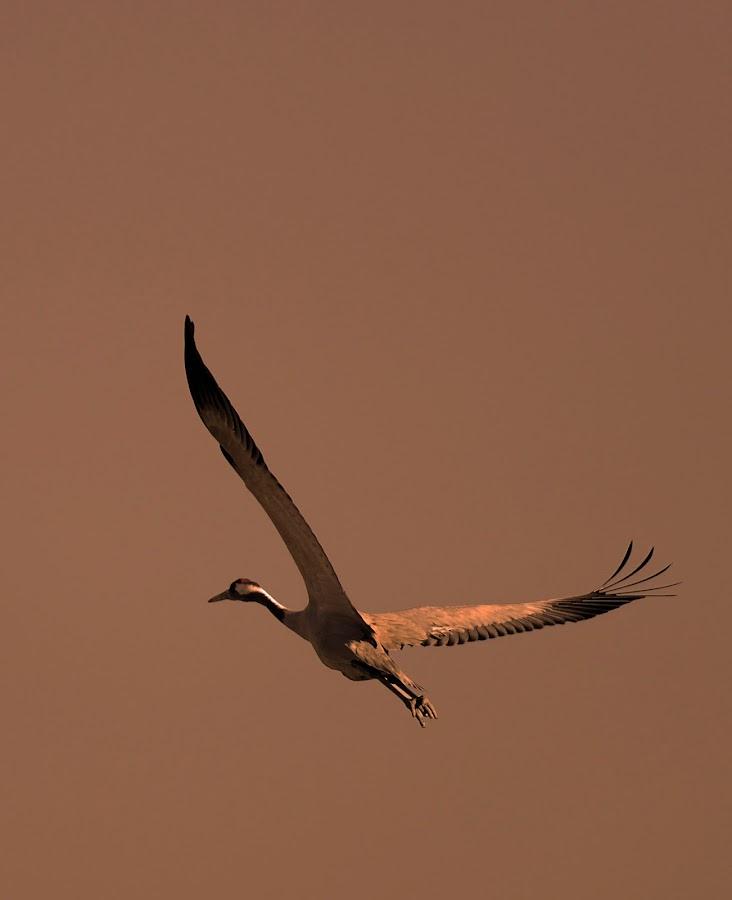 by Sudipta De - Novices Only Wildlife