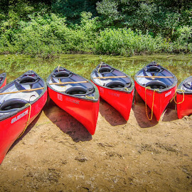 Canoe Row by Ed & Cindy Esposito - Transportation Boats ( many, elm park, red, charles river, wellesley, ma, trees, canoes, river )
