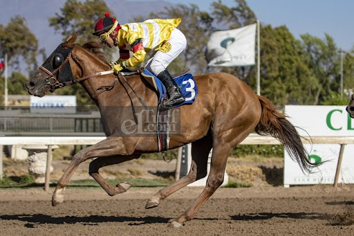 Don Quillagua (Don Cavallo) se impuso en Handicap (1200m-Arena-CHS).