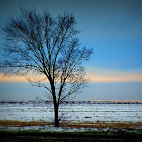 Blue Morning by Teresa Delcambre - Landscapes Prairies, Meadows & Fields ( field, pasture, winter, tree, cold, desolate, snow, morning, lonely )