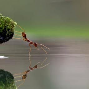 berkaca di riak gelombang by Teguh Santosa - Animals Insects & Spiders