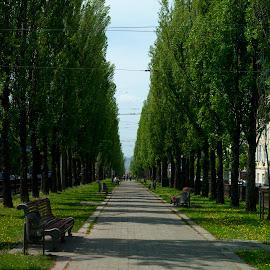 by Vladymyr Sergeev - City,  Street & Park  City Parks