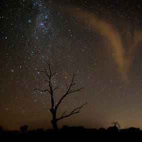 Star Tree by William Greenfield - Landscapes Starscapes ( sky, tree, silhouette, star, cloud, night )