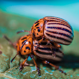 bugslife by Jorge Pacheco - Animals Insects & Spiders