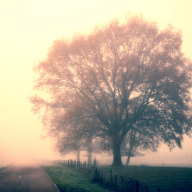 The tree of my village by Anne-Cecile Pflieger - Landscapes Prairies, Meadows & Fields ( countryside, pathway, way, autumn colours, road, sunlight, prairie, rural, country, field, fence, foggy, annececilegraphic, tree, fog, autumn, meadow, path, trees, autumn colors, light, misty, mist )