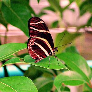 Butterfly 2007_2.JPG