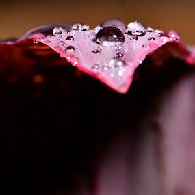 Setelah hujan...... by Zamri Ahmad - Nature Up Close Flowers - 2011-2013