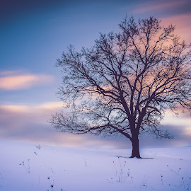 Stand Alone by Andrea Wolfe - Landscapes Prairies, Meadows & Fields ( clouds, winter, tree, snow, long exposure )