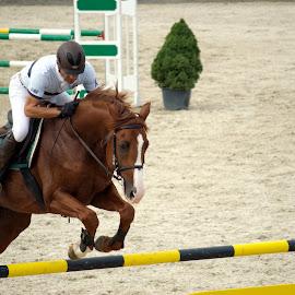 by Dana Dana - Sports & Fitness Rodeo/Bull Riding ( horses, race )
