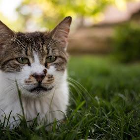 Cat enjoying the day by Manuel Herrmann - Animals - Cats Portraits ( cat, grass, green, istanbul, animal )