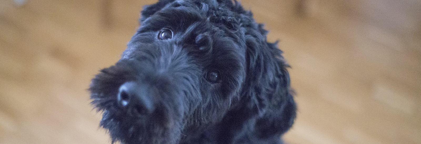 Dog Grooming Holcombe