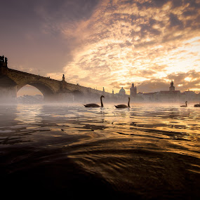 Golden Dusk by Petar Lupic - Landscapes Sunsets & Sunrises ( water, bridge, sunrise, petar lupic, landscape, praha, prague, mist )