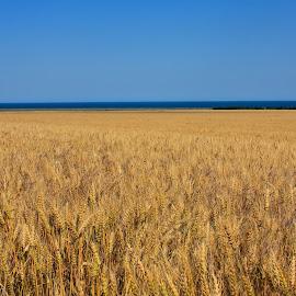 by John Herlo - Landscapes Prairies, Meadows & Fields