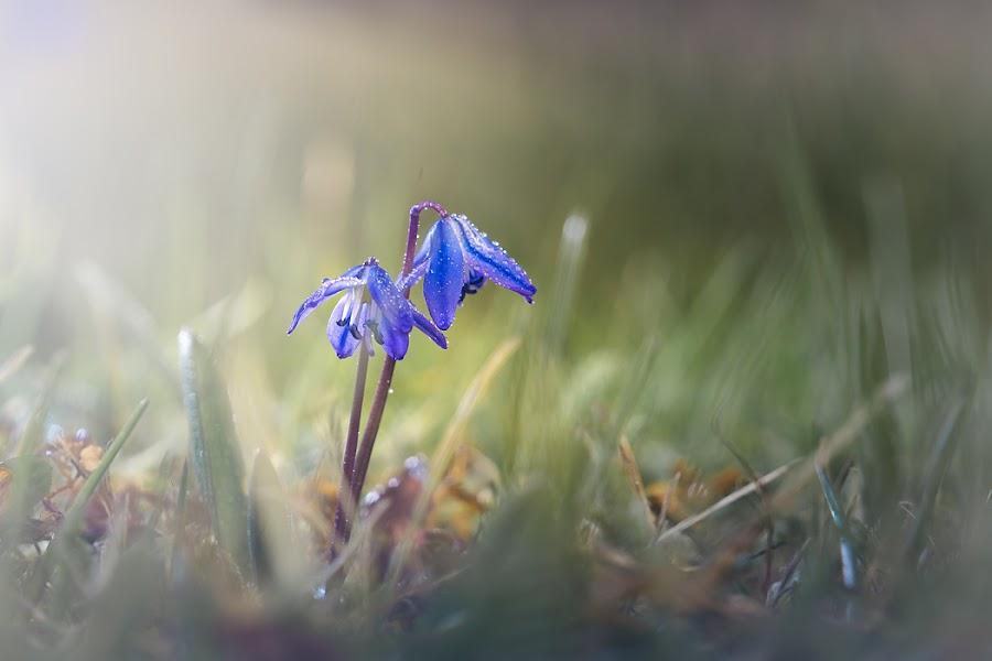 by Radek Winter - Flowers Flowers in the Wild