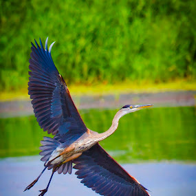 by Steven Burki - Animals Birds