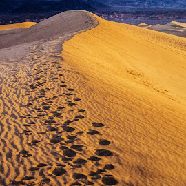 Dune at Sunrise by Richard Michael Lingo - Landscapes Deserts ( sand dune, sand, death valley, desert, landscape,  )