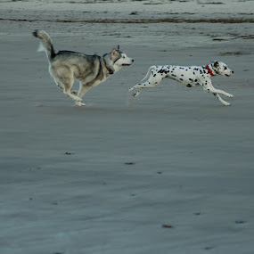 by Hayley Warriner - Animals - Dogs Running