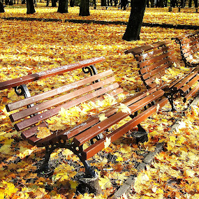 Golden autumn by Vida Jankaitiene - City,  Street & Park  City Parks ( benches, autumn, silence, trees, yellow,  )