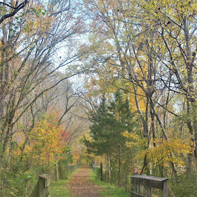 Walking through the woods by Karen Beasley - Landscapes Forests ( fall, trail, path, bridge, walk )