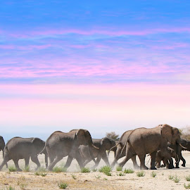 Delta Elephants! by Anthony Goldman - Animals Other Mammals (  )