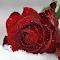 DSC_8216aa.jpg