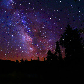 Milky Way  Highway... by Dennis Ducilla - Landscapes Starscapes ( purple, stars, nevada, tahoe, trees, night, ducilla, photography, milky way, galaxy )