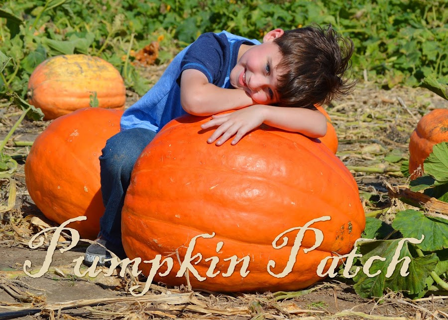 Pumpkin Patch by Shannon Maltbie-Davis - Typography Captioned Photos (  )