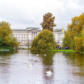 Buckingham Palace from St. James's Park in Fall by Drew Selman - Buildings & Architecture Public & Historical