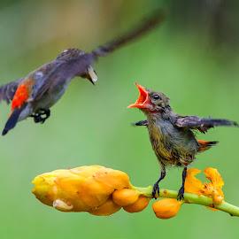 Feeding by MazLoy Husada - Animals Birds