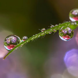 Violet by Citra Hernadi - Nature Up Close Natural Waterdrops