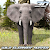 Wild Elephant Hunter file APK Free for PC, smart TV Download