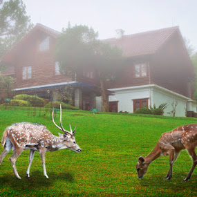The deer by Basuki Mangkusudharma - Animals Other Mammals ( park, deer )