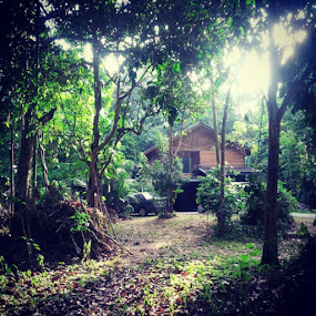 Green.. thats y i love my kampung ... by Soul Latif - Instagram & Mobile Instagram