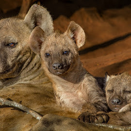 Family Portrait of a hyena family by the den by Nobby Clarke - Animals Other ( wild, nature, park, pup, wildlife, africa, hyena, mammal )
