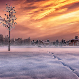 Morninglights over Swe Lappland by Peter Björklund - Landscapes Sunsets & Sunrises