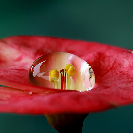 Single Dew by Farid Wazdi - Nature Up Close Water