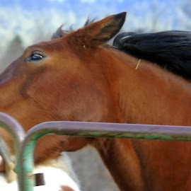 LOVE BITE by Cynthia Dodd - Novices Only Pets ( wild, horses, bite, outdoors, wildlife )