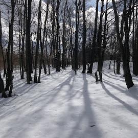 Зима by Georgi Kolev - Landscapes Forests ( сняг., небе., гора., слънце., облаци., сенки. )