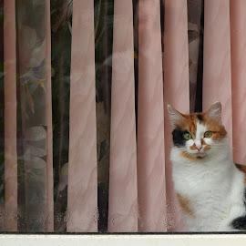 by Alex Zhurbenko - Animals - Cats Portraits