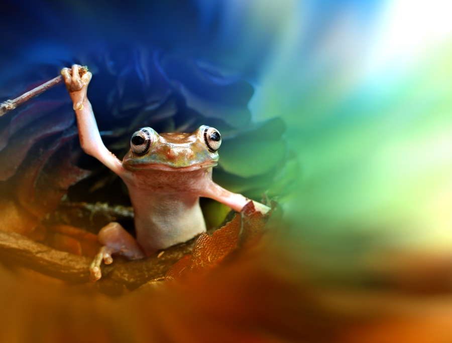 Time Traveler by Andi Adinata - Animals Amphibians