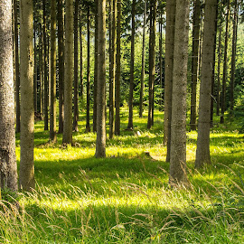 by Michal Valenta - Landscapes Forests (  )