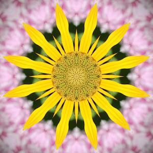 yellow rubeckia 1.jpg