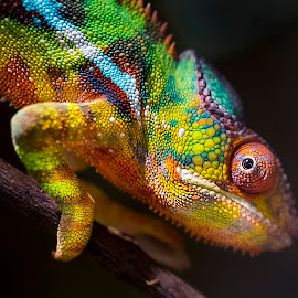 by Stanley P. - Animals Reptiles