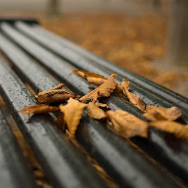 Fall on bench by Roxana Stoica - City,  Street & Park  City Parks ( #orange, #bench, #autumn, #city, #leaves )