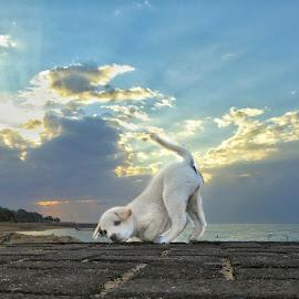 My Puppy Tofu at Sunset 😊 by Peter Art - Animals - Dogs Puppies ( puppy sunrise beach dog animal )