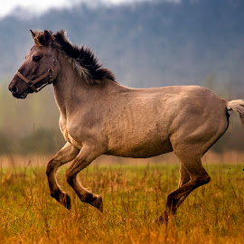 *** by Stanley P. - Animals Horses ( horses )