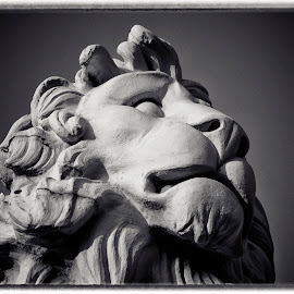 King of Westminster by Helen Mathias - Buildings & Architecture Statues & Monuments ( lion, statue, london, westminster bridge )