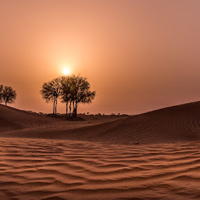 Desert Sunset by Walid Ahmad - Landscapes Deserts ( desert, sunset, travel, landscape, photography )