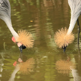 4 Bird Heads by Michael Loi - Novices Only Wildlife ( bird, crown, sg )